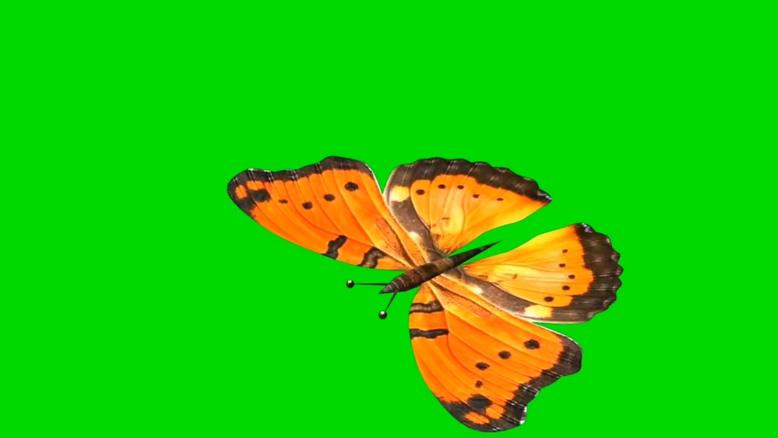 黄色蝴蝶飞舞视频素材带绿色通道可抠图