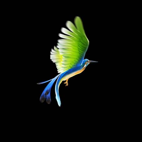 漂亮飞鸟挥舞翅膀的视频素材(带通道)