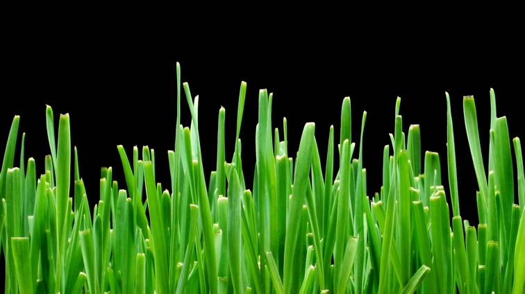 植物从屏幕下方生长的视频素材(带通道)