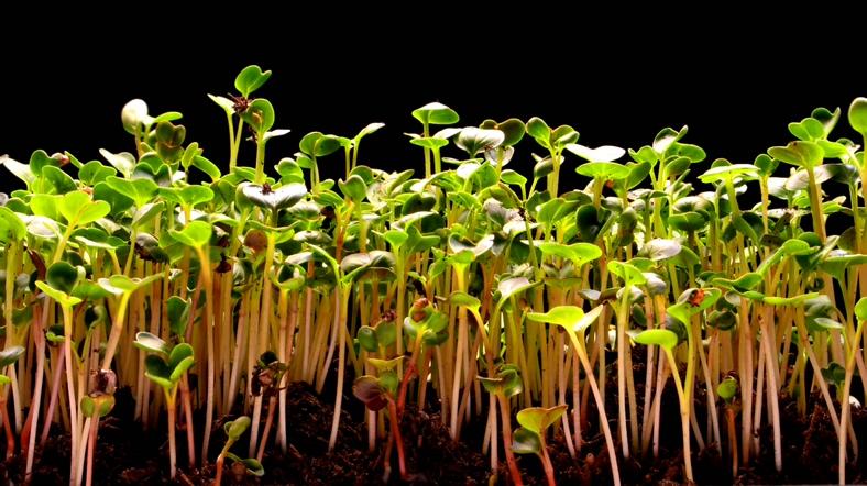植物从地里疯狂生长的视频素材(带通道)