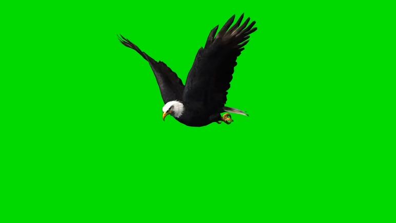 飞翔的老鹰视频素材带绿色背景幕布通道可视频抠像