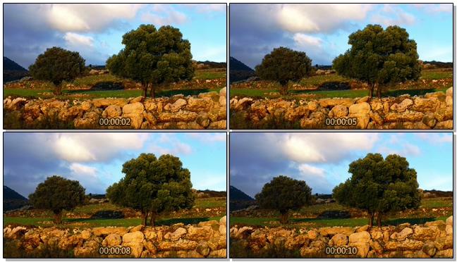 梦幻黄昏下树木随风飘动的实拍视频