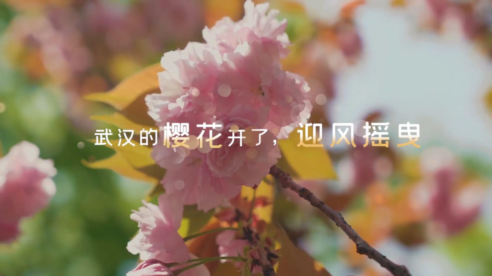 武汉樱花疫情过后唯美光斑实拍视频字幕展示视频素材